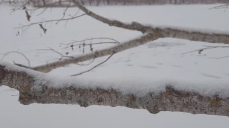 The camera slides along the Thick Branch of a fallen tree covered in snow in cloudy twilight weather. Stockvideo