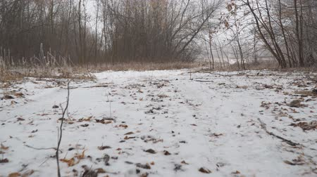 The camera glides over the snow-covered trail. The point of view of a dog walking on a snowy forest path