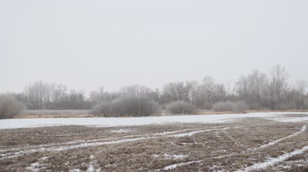 View of a snow covered glade or meadow on a cloudy foggy day. Camera panning Стоковые видеозаписи