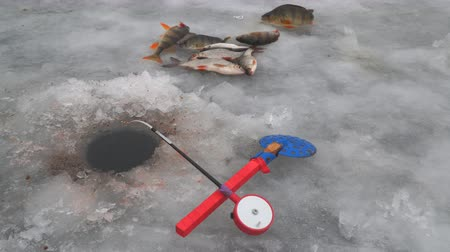 Ice fishing. Fishing rod for winter fishing, scoop, holes and fish on ice. Selective focus Стоковые видеозаписи