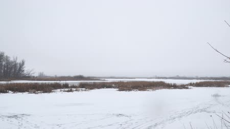 A frozen lake or swamp. Dry marsh grass in the snow. Camera panning