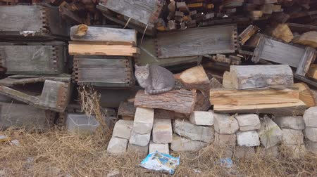 jump away : A gray cat sits by the logs of old firewood, and then runs away