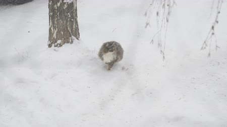 favori : A grey cat sits in the snow during a snowfall, and then leaves
