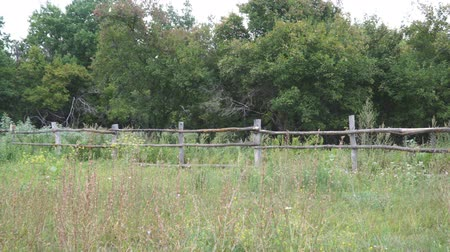 scherma : Primitive rustic wooden fence in front of the forest
