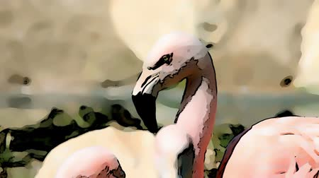 subtropics : Cartoon effect added to a shot of flamingo walking around