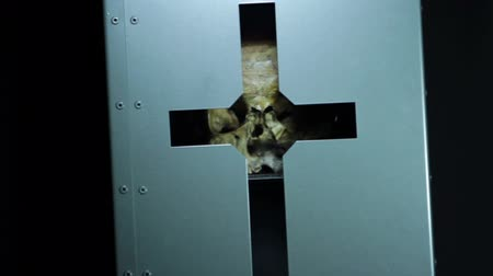 parke taşı : Close up of skull in a box with engraved cross