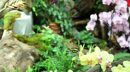 maceška : Colorful garden with butterflys,  orchids,  trees and other exotic plants