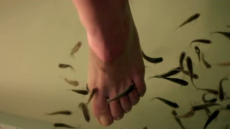 garra : close up shoot of feet being cleaned by small fishes in aquarium
