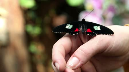 canteiro de flores : Small beautiful and colorful butterfly on womans hand