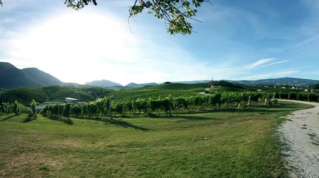 kopec : Crane shot of the sceneric wineyard with amazing landscape in the backgrounds Dostupné videozáznamy