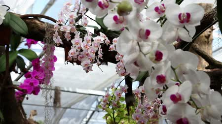 benessere : Bellissime orchidee