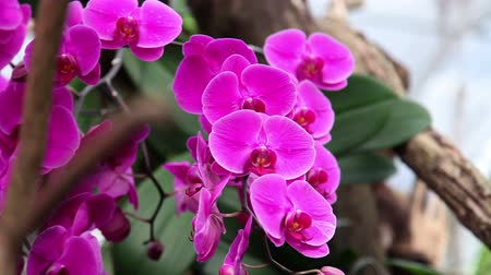 dendrobium : Beautiful orchids blossom