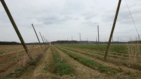 elhagyatott : Shot of an abandoned field for hops where now grass is growing
