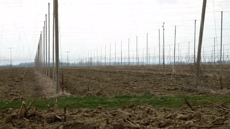 hops : Abandoned field of hops in fall Stock Footage
