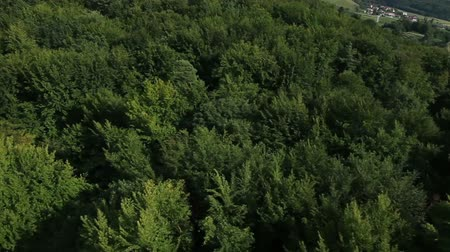 outside view : Shot from helicopter representing hills covered with green forest Stock Footage