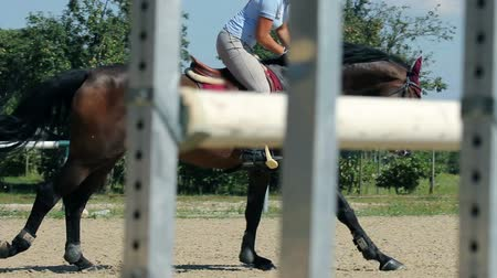 animal jovem : side close up of a woman jockey jumping over obstacles  Stock Footage