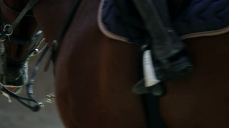 dizgin : close up of a horse in big hall Stok Video