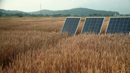 мучной : Little girl on a grain field with a solar power panels