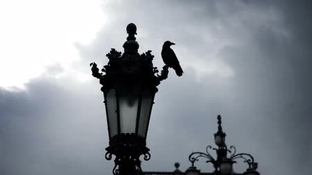 birds flying : a town near sea in Italy and street lamp with a pigeon