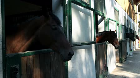 istálló : Horses in big stall looking outside Stock mozgókép