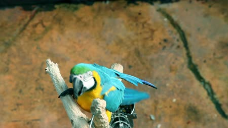 ara papagáj : visiting zoo and beautiful and colorful parrot shooted from above