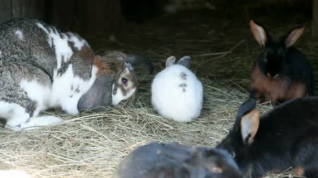 hayloft : visiting zoo and rabbits while eating hay and other specialities