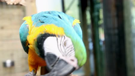 hloupý : visiting zoo and beautiful and colorful parrotmaking funny moves