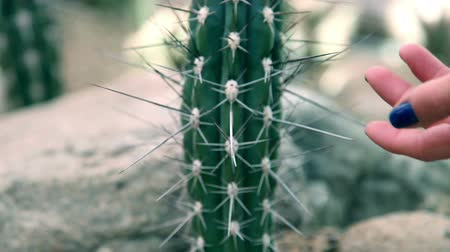 prickly : visiting zoo and touching big cactus with long spines