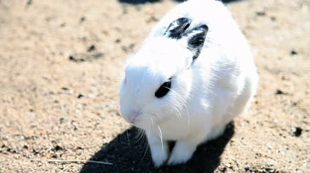 domestic animals : visiting zoo and rabbits while eating hay and other specialities