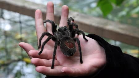 macro : spider on hands in zoo