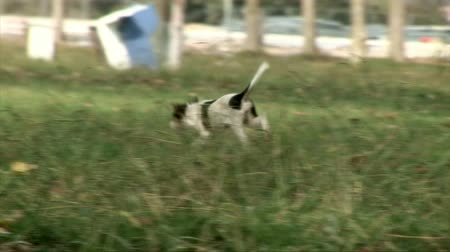 at kuyruğu : Dogs on the grass.