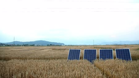 мучной : Shot of a several solar panels in the middle of a golden field