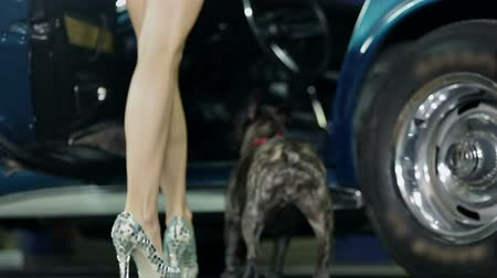 auto show : Woman opens the door of blue Corvette for french bulldog to enter the car