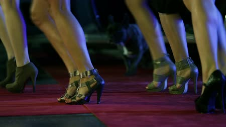high heels : Pan shot of long women legs and french bulldog wondering around