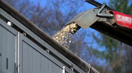 лесозаготовки : Close shot of gutter spurting wooden particles