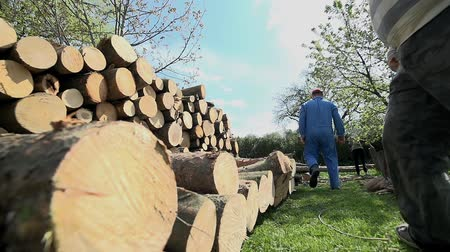 palivové dříví : Kicking log on to pile of wood with leg in slow motion. Storing timber for winter, cutted to small logs for later cutting. Dostupné videozáznamy