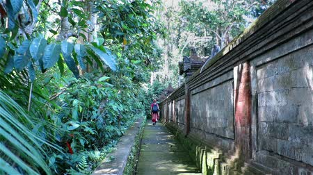 macaca fascicularis : Woman walking through Sacred monkey forest in Ubud, Bali