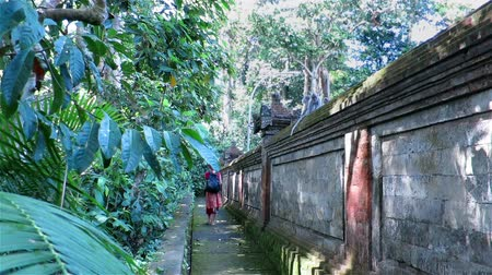 macaca fascicularis : Girl walking by stone temple fence and observing monkeys