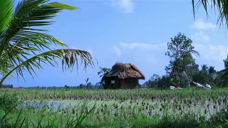 kulübe : Hut in the middle of rice fields in Bali Stok Video