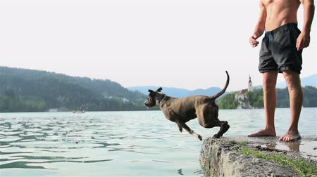 salto : Dog jumping in to lake after slipper slow motion. Medium shot of man and dog playing fetch with slipper throwing in to lake.