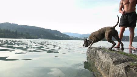 salto : SLOW MOV: Dog fetch wooden stick in to water. Male owner and dog standing on rocky lake edge playing fetch with wooden stick. Stock Footage