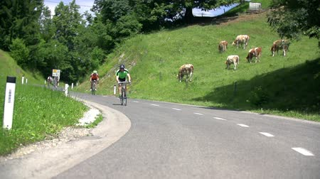 vyhlídkové : VRHNIKA, SLOVENIA - JUNE 2014: Cycling down the road passing crowd of cows. Few professional bicyclists racing down the hill with cows on lawn in background on a sunny day.