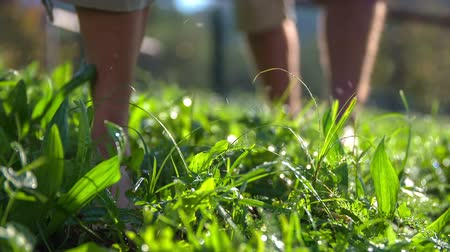 traverse : Couple walking trough the wet grass . Slow motion RAW close up footage of a couple walking trough the wet grass and the drops of water are flaying around on a sunny day. Stock Footage