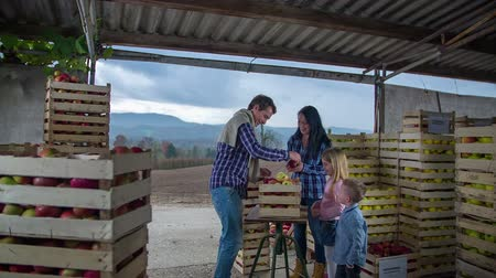 tasmania : Young family on a farm an a man brings the basket full of apples to the table, footage is taken in slow motion. Stock Footage