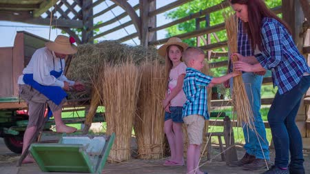 Children helps working under hay-rack which is standing on a great location on the countryside with great environment Stock Footage