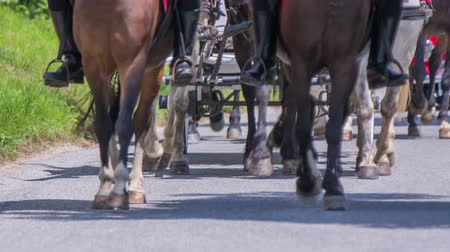 sáně : In this video, we can see horses feet walking when pulling a carriage. Close-up shot. Dostupné videozáznamy
