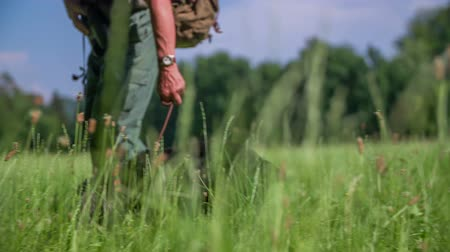 hunting dog : Hunters dog  in a nice green lawn near wood which is pointed on a very natural countryside. Stock Footage