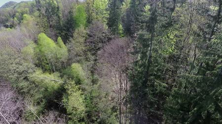 olhando para baixo : In this video, we can see the inside of a forest. The nature looks fascinating during this time of year and the trees have nice green colour. Wie-angle shot.