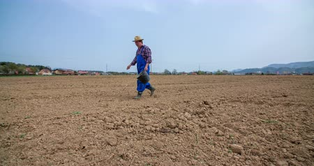 bahçıvan : A senior farmer is walking across the field with a black bucket in his hand. He is taking seeds out of it and is throwing them all around. He is sowing wheat. Stok Video