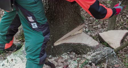 keser : A man approaches a tree and wants to cut it down with an axe. A smaller piece of wood falls out on the ground. Close-up shot.